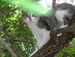 Le chat de Léa
